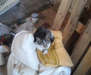 cat1.jpeg